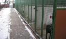 altbau-hundehaus-2