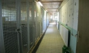 altbau-hundehaus-5-