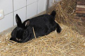 Kaninchen Bibi