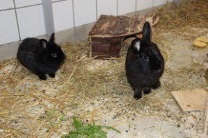 Kaninchen Camillo und Miss Marple