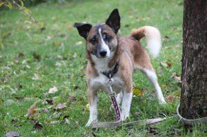 Mischlingshund Jonny