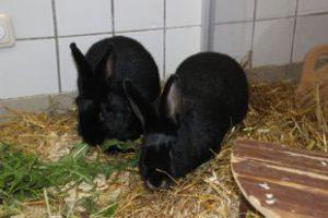 Kaninchen Bongo und Mimi
