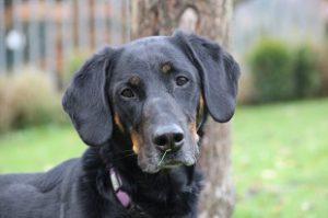Mischlingshund Rocky