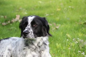 Mischlingshund Socco