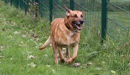 Mischlingshund Timmi