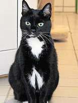 Katze Sophia