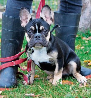 Hund Rocky