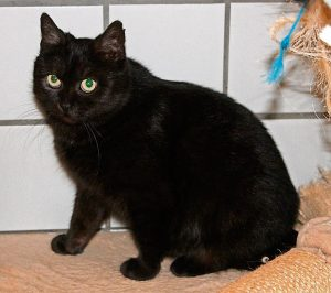 Katze Hazel