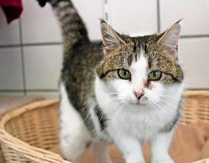 Katze Leonie