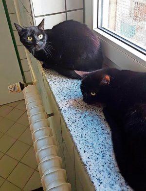 Katzen Milli und Molli
