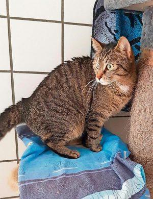 Katze Kiki