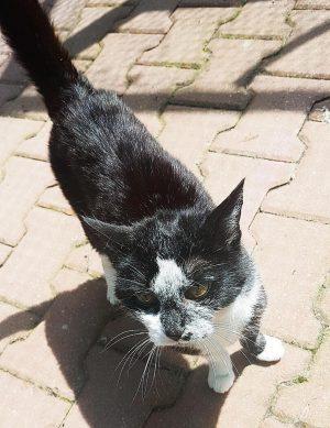 Katze Clarissa