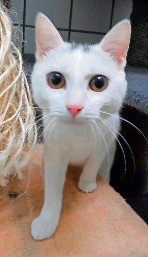 Katze Melody