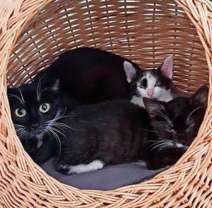 Katze mit Kaetzchen