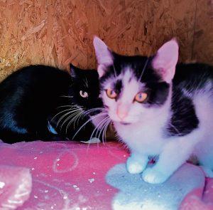 Kätzchen Kassandra mit Mutter Nicky