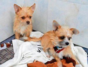 Hunde Nico und Nils