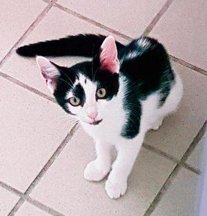 Katze Kassandra