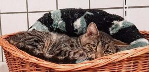 Animalhoarding-Katzen2