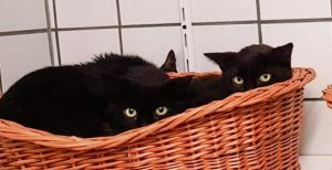 Animalhoarding-Katzen1