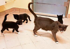 Katze Mariola mit Babys