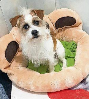 Hund Rocco