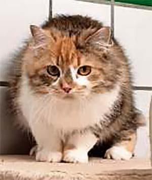 Katze Fussel