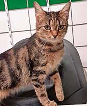 Katze Rita