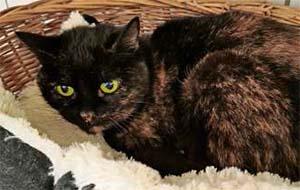 Katze Martha