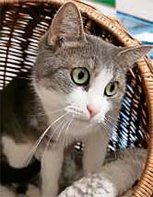 Katze Wilma